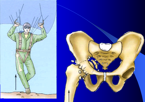 Joints of Upper , Lower Limb and Skull