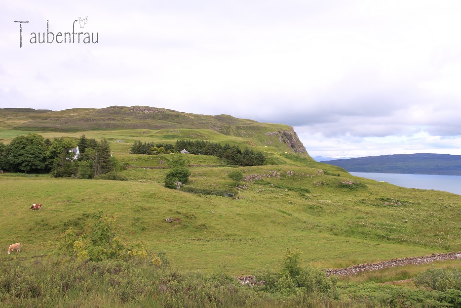 taubenfrau schottland isle of skye iii nature around our cottage and portree. Black Bedroom Furniture Sets. Home Design Ideas