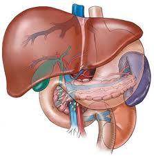 Bài thuốc chữa bệnh gan