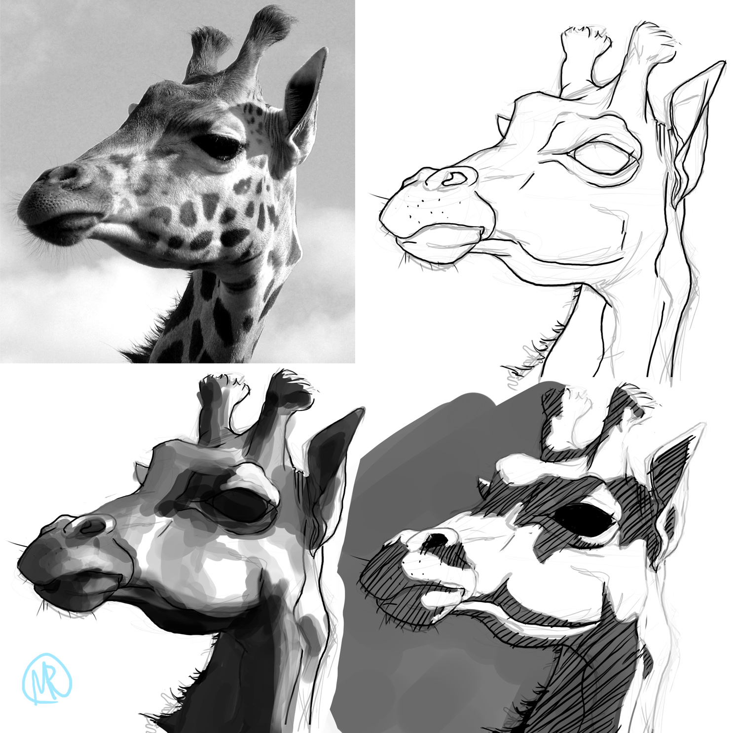 Giraffe Face Pencil Drawing - photo#34
