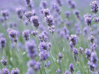 med travnimi bilkami gol do pasu │ nebo nad menoj cvet sivke │ nasmeh mimo vrste
