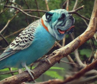 GAMBAR DIRDS DOGBIRDS BURUNG UNIK Foto Dirds Hewan Hibrida Burung-Anjing