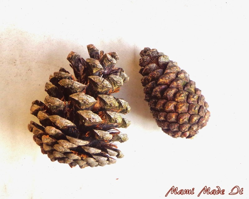 Pine Cones - Kiefernzapfen