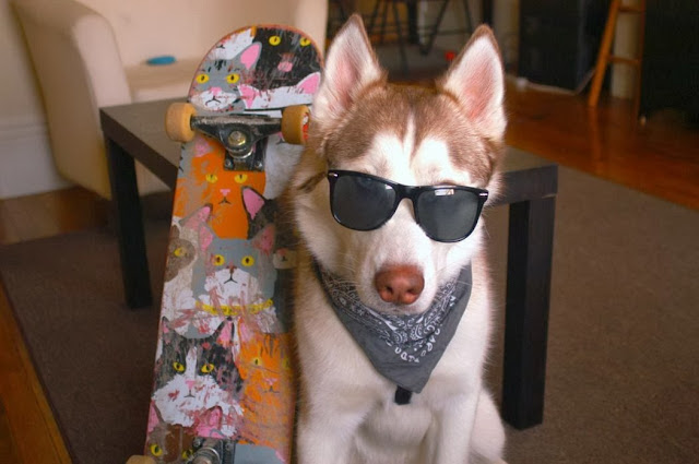 Cute dogs - part 3 (50 pics), cool dog wears sunglasses