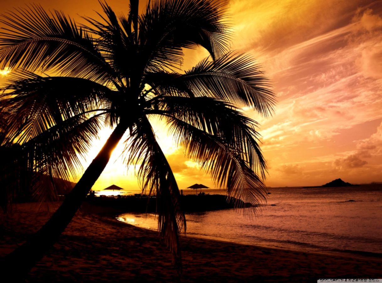 Tropical Beach Sunset HD desktop wallpaper  Widescreen  High