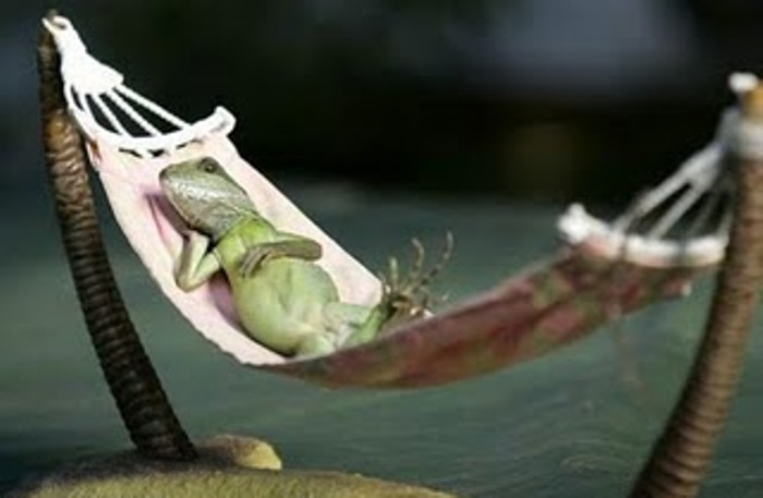 Funny Lizards Relax Like Amazing Photos