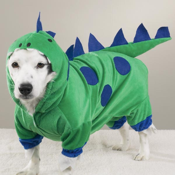 Dog Dragon
