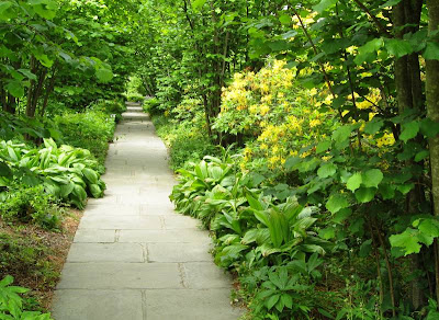 Path bordered by assorted greenery