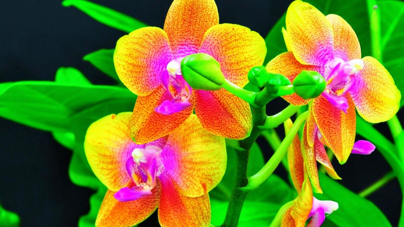 Meilleurs fonds d 39 crans paysages et fleurs fond ecran pc - Catalogue de fleurs gratuit ...