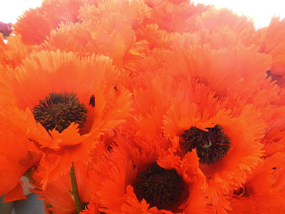 poppies at pikes place market