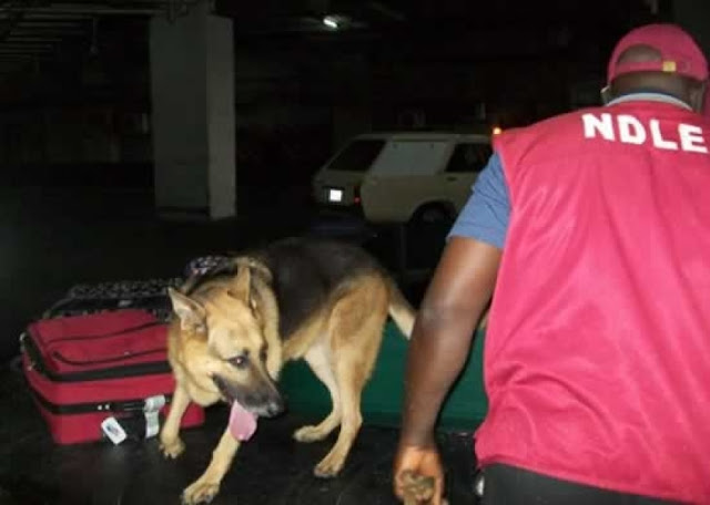 NDLEA nabs woman, accomplice at Lagos airport with hard drugs