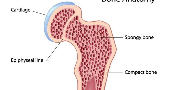 how to know if you have bone cancer