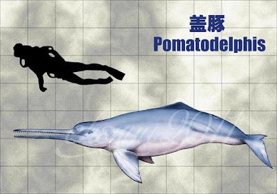 Pomatodelphis