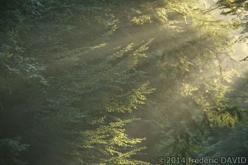 forêt lumière soleil matin brouillard brume forêt Fontainebleau Seine-et-Marne