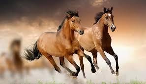 que-numero-jugar-en-la-loteria-si-sueño-con-caballos