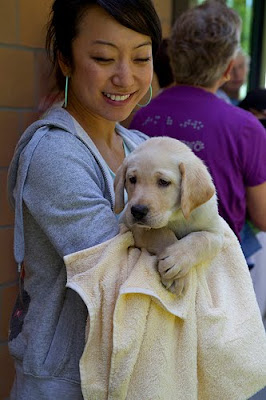 Young female volunteer holds yellow Lab puppy in towel