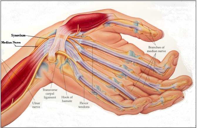 El dolor en la zona subcostal derecha de la parte de la espalda