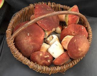 vkusniogorod - грибы