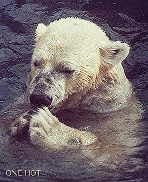 Tuhan, aku terjerumus lagi, uang hasil korupsiku kalah di meja parlemen beruang, katanya mereka bantu aku supaya bisa masuk ke parlemen, tapi mana buktinya, uangku habis, partai beruang ngak mendukungku, oh pilunya.. (Stress elus janggut)