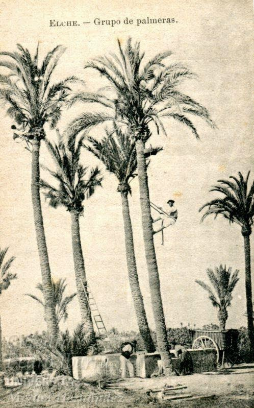 collecting dates, one century ago