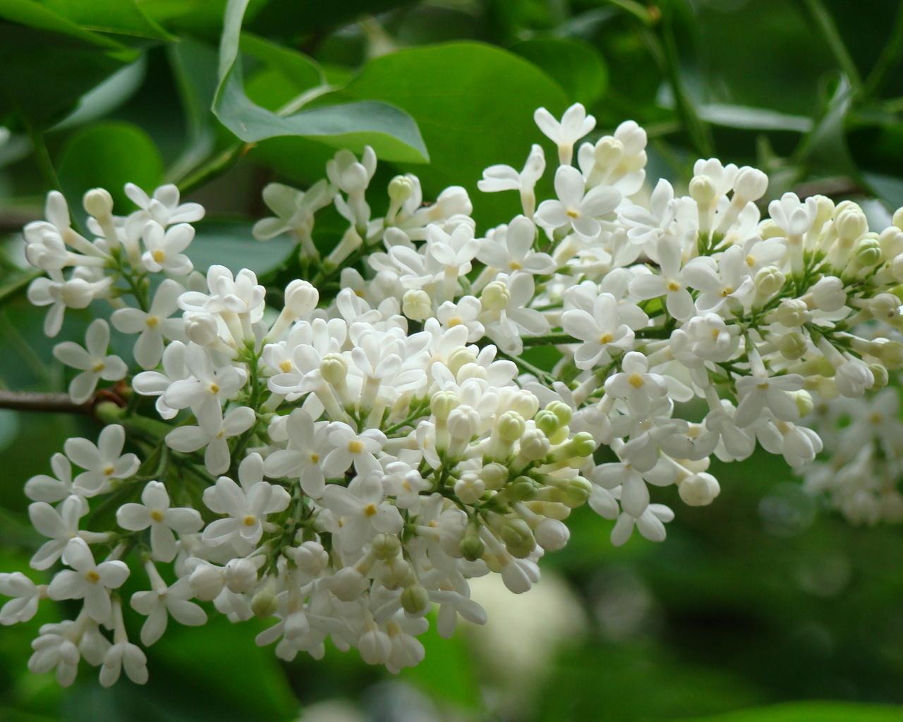 Imagini cu flori de primavara | Photoblog