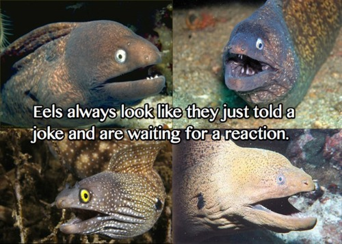 Eels Always Look Like They Just Told A Joke And Are Waiting For A Reaction