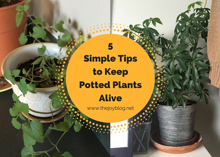 5 Simple Tips to Keep Potted Plants Alive