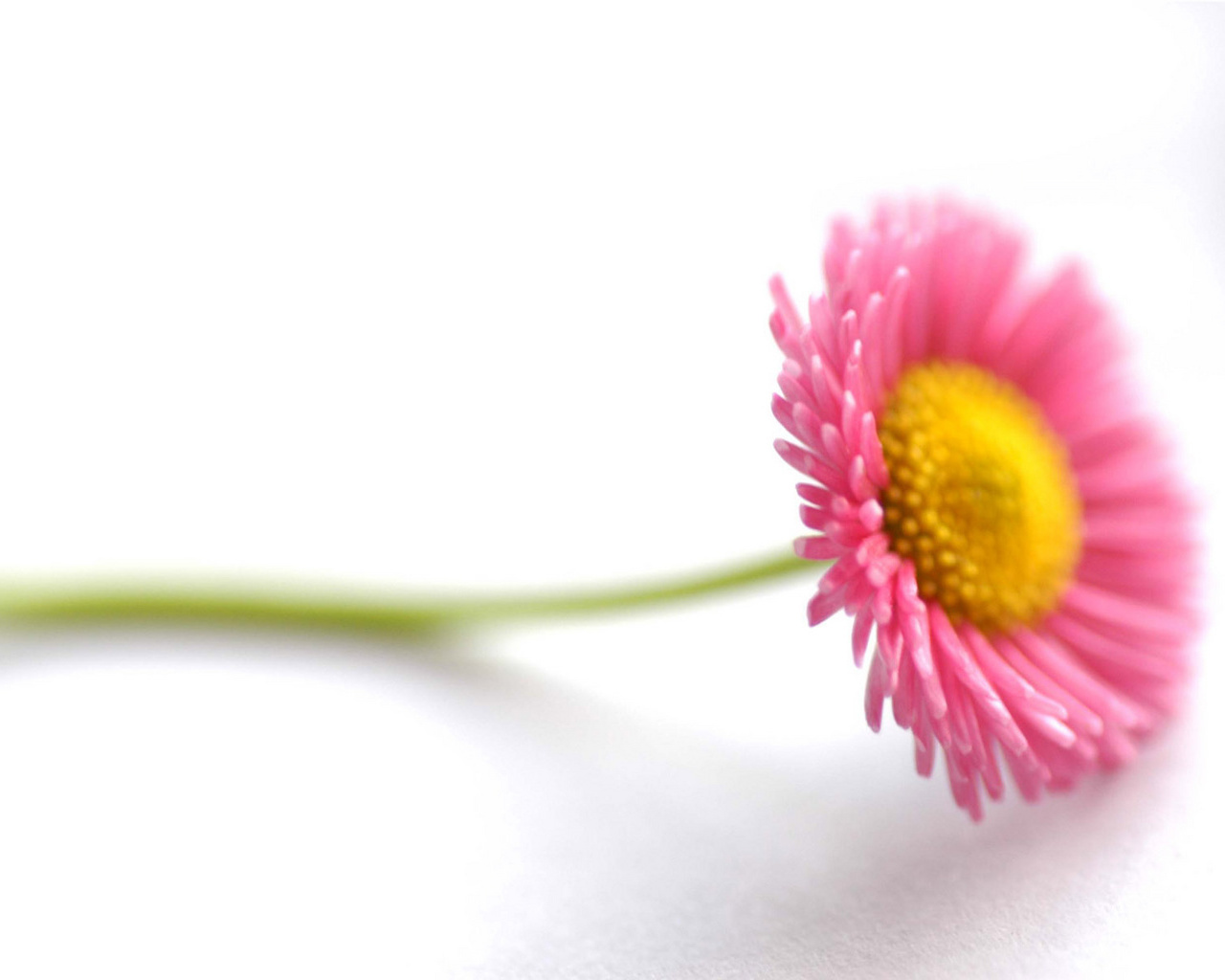 flower background with structure - photo #13