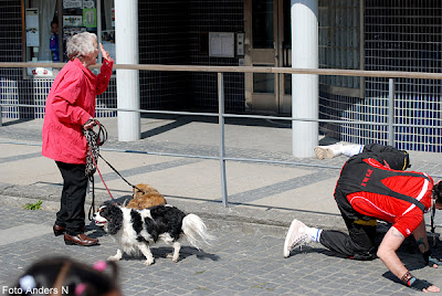 hund, kissande, pissande, kiss, piss, dog, pissing, piss, imitator, old lady, laughing, gammal dam, tant, skrattar, tsyfpl, foto anders n, gatufoto, street photo, street photography