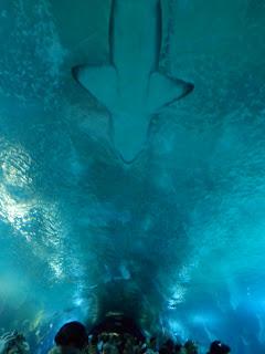 Shark swimming over the crowds in the oceanarium, Valencia L' Oceanogràfic