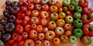 http://3.bp.blogspot.com/-_U_sm_8mRB4/UCJWVdu9w7I/AAAAAAAAIy4/cld76GI5hsg/s1600/tomatorainbow%252C.jpg
