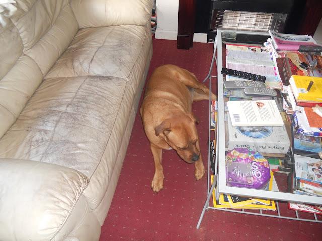 Sheba having a lie down.