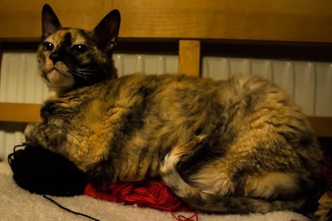 katt på garn