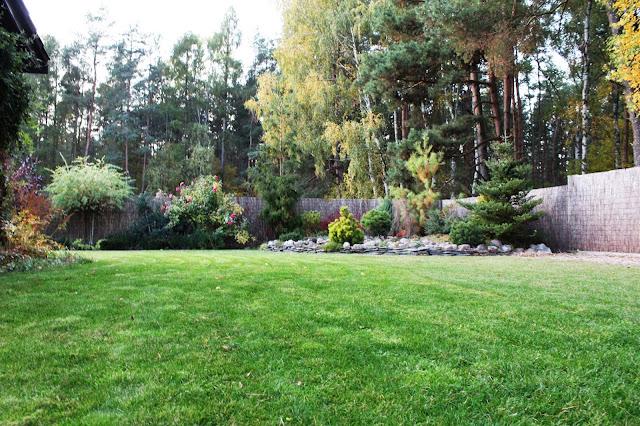 piękna darń, piękny zadbany ogród ile wymaga czasu,liście na trawnik