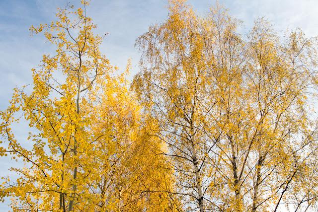 Jesienna fotografia krajobrazu. Jesień w Rudzie Śląskiej. fot. Łukasz Cyrus, Katowice