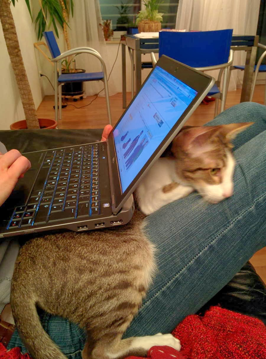 Funny cats - part 81 (40 pics + 10 gifs), cat pics, cat laptop