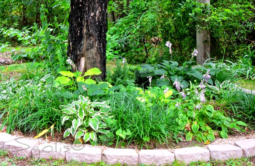 Shade Garden Plans Photograph Another time to water your g