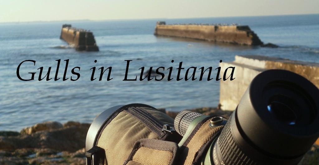 Gulls in Lusitania