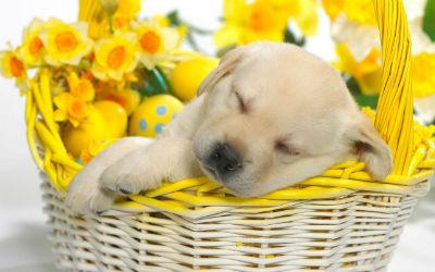 Labrador Retriever Owners Blog: Labrador Puppies Make Your ...