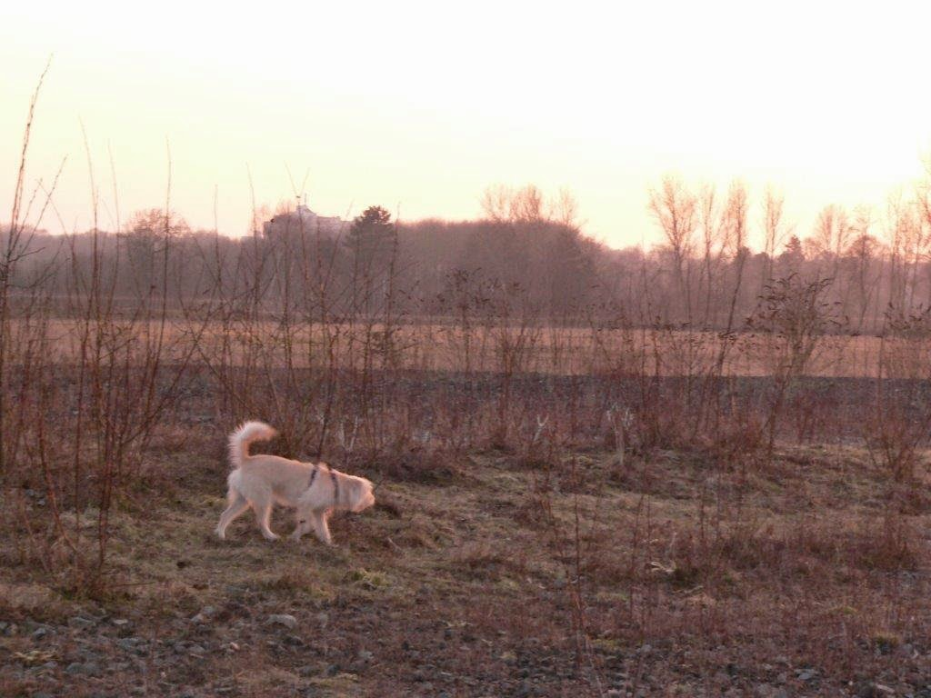 Dortmund Ruhrgebiet Sonnenuntergang Hund