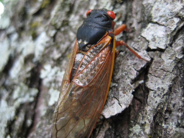 cicada @freemotionquiltingadventures