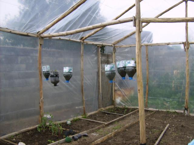 Plantines colgando fabricados en botellas de agua para for Orto pensile fai da te