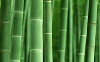 Cara Mengkilapkan Batu Akik Dengan Kulit Bambu