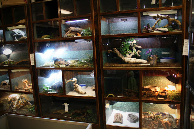 Zoo keeper exotic pets free fun in austin for Fish store austin