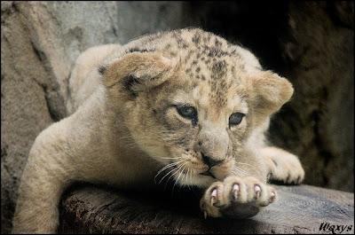 Mặt buồn của động vật