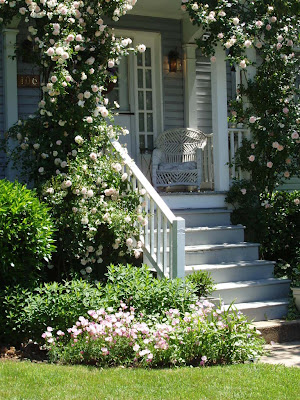 Miss gingham climbing roses for Exterior painting wilmington ma