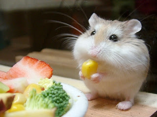 Cute mouse nibbling