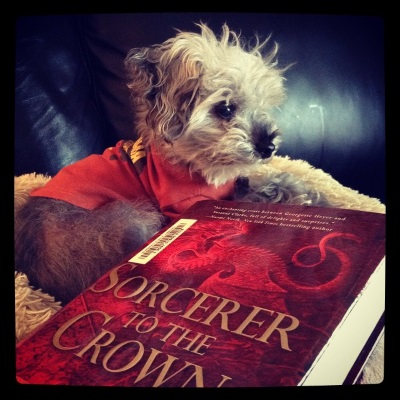 A fuzzy grey poodle, Murchie, lays on a fluffy white blanket with his face towards the right hand side of the screen and his paws crossed in front of him. He wears an orange t-shirt with brown cuffs. In front of him is a hardcover copy of Sorcerer to the Crown. Its monochromatic red cover features a roaring dragon perched atop the title.