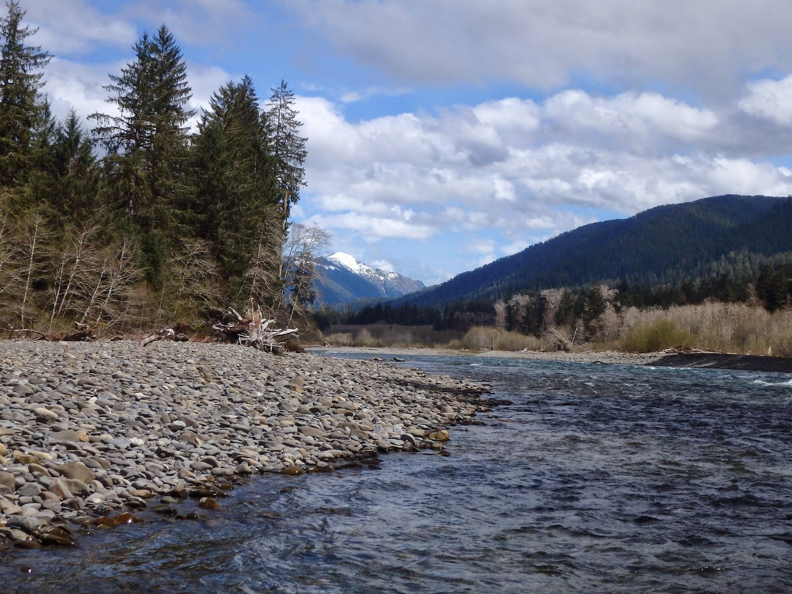 Bob humphrey fly fishing llc hoh river steelhead trip for Hoh river fishing