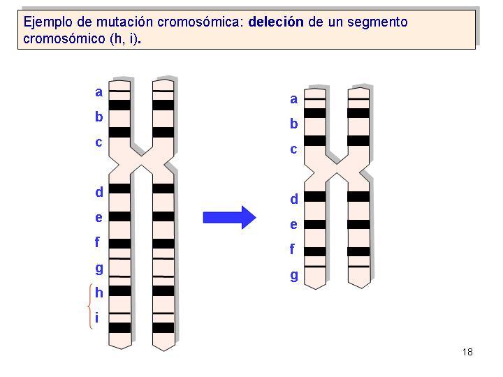 mutaciones de cromosomas: